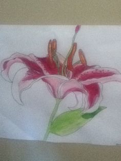 My water colour of a flower