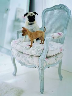 Great Baby Blue Chair, puppies are great too!