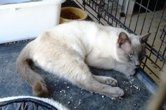 Snowflake is ready for her tail to heal so she can go play with the other cats!