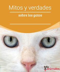 Mitos y verdades sobre los gatos -Mejor con Mascotas Hay muchos rumores que circulan sobre nuestros amados mininos, mira algunos de los mitos y verdades sobre los gatos.