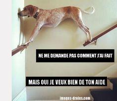 Ne me demande pas comment j'ai fait pour être perché sur les escaliers, mais oui, je veux bien de ton aide...
