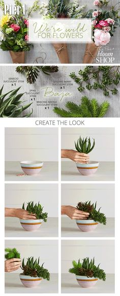 Pier 1's Baja arrangement is just what accent tables, kitchen counters and entryways need for a refreshing spring touch. Our faux succulents, in beautiful shapes and shades, are a simple way to add color and texture.