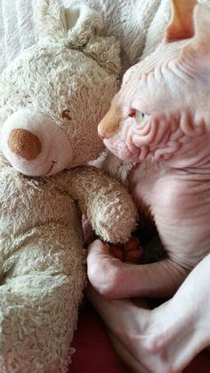 Zeddicus and his teddyrabbit