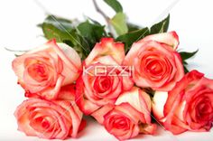 pink rose bunch - Pink roses piled together on a white surface.