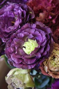 eustoma frill grape parfait
