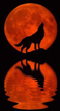 ★Good Night Moon - Moonstruck Part XXI