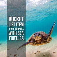 Bucket List Ideas: Snorkel with sea turtles