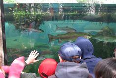 Idaho Fish and Wildlife Foundation works hard to preserve Idaho's wildlife heritage.