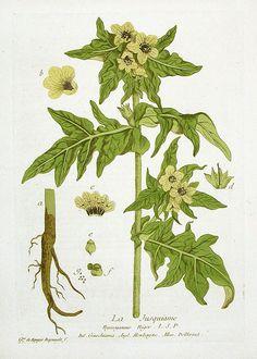 Nicholas Francois Regnault La Botanique Prints 1774