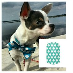 My #chihuahua spot with a matching #jamberry #nail #wrap #design. www.jaszumie.jamberrynails.net