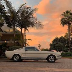 Ford Mustang Eleanor, Mustang Gt 350, Ford Mustang Shelby Gt500, Mustang Cars, Aesthetic Vintage, Aesthetic Photo, Aesthetic Pictures, Travel Aesthetic, Orange Aesthetic