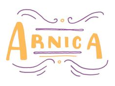 A toxic herb, arnica is diluted in homeopathic remedies to soothe muscle aches, heal wounds, and reduce inflammation.