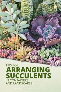 Arranging Succulents in Containers and Landscapes These tips will help make your succulent arrangements extra beautiful and eye catching!These tips will help make your succulent arrangements extra beautiful and eye catching! Succulent Landscaping, Propagating Succulents, Succulent Gardening, Succulent Terrarium, Succulents Garden, Container Gardening, Garden Plants, Organic Gardening, Landscaping Design
