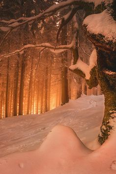 In Princes Street Gardens Edinburgh, Scotland Winter Sunset, Winter Love, Winter Snow, Winter Christmas, Christmas Time, Winter Schnee, Photo D Art, Winter Magic, Snow Scenes