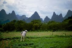 Chinese peasant working among gastric pics, XingPing, Guilin, China