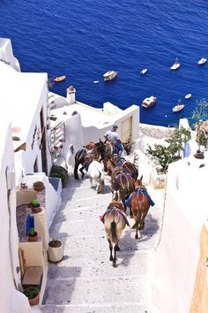 Santorini, Greece. Experience the charm of Oia, the island's northernmost town, a whitewashed labyrinth of narrow, twisting cobblestone alleyways where you just may get passed by donkeys along the way.