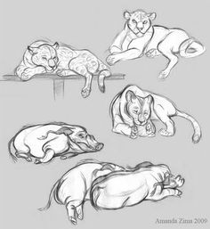 Amanda's Drawing Blog: zoo #3