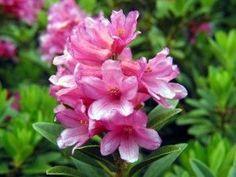 flores plantar primavera - Buscar con Google