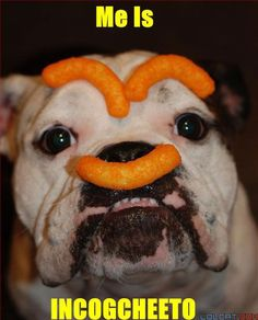 two of my favorite things...bulldogs & cheetos