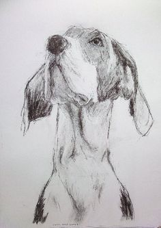 Great Dane puppy charcoal drawing by William H Jones Great Dane Puppy, Very Cold, Left Alone, Charcoal Drawing, Dog Portraits, Animals Beautiful, Best Dogs, Illustration, Puppies