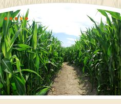 Portland Corn Maze - The Maize at The Pumpkin Patch >  Haven't tried this yet, it's on the bucket list.