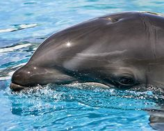 Google Image Result for https://www.orbitz.com/blog/wp-content/uploads/2011/04/Wholphin_Sea_Life_Park_Hawaii.jpg
