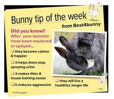 Bunny tip - week 32 So many benefits to having your bunnies neutered or spayed. I'm just apprehensive about the vets around here. Mini Lop Bunnies, Dwarf Bunnies, Baby Bunnies, Bunny Toys, Rabbit Farm, Rabbit Cages, Bunny Rabbit, Fluffy Rabbit, Lana Banana