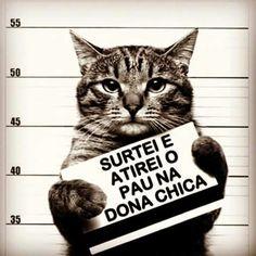 Vai Atirar o Pau no Gato!