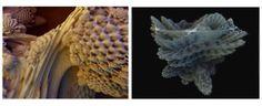 Data is Nature (dataisnature.com/) é o nome do blog criado pelo artista visual Paul Prudence, cujo trabalho em arte generativa integra conceitos como visual music, process art, e computational desi…