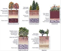 Soil types in different biomes