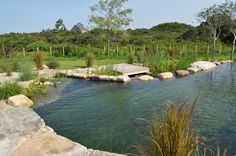 Natural Swimming Pool Designs – If you are looking for a minimalist and simple home design idea, then the Natural Pool Design might be one of your best references, … Natural Swimming Ponds, Natural Pond, Swimming Pools Backyard, Ponds Backyard, Swimming Pool Designs, Backyard Landscaping, Lap Pools, Indoor Pools, Pool Decks
