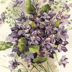 Violets by Catherine Klein