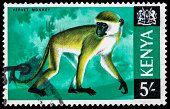 Kenya Macaco Vervet Selo Postal