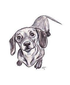 Dachshund sketc #dachshund sketch