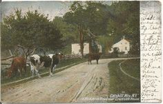 Cows in Road in the Catskill Mountains New York Vintage Undivided Back Postcard UDBPC Rural Farmland Scene (12.99 USD) by postcardsintheattic