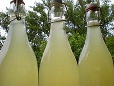 Cuisine sauvage / limonade de tilleul ...