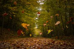 Fall Photography in October | Posted on October 16, 2012 Updated on October 16, 2012