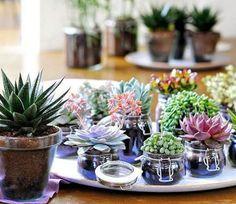 Cómo decorar con plantas suculentas   Cuidar de tus plantas es facilisimo.com