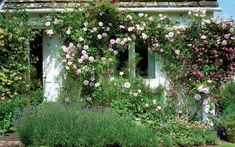Hybrid Sempervirens rose 'Princesse Marie' in Virginia Woolf's garden | Photo: Caroline Arber
