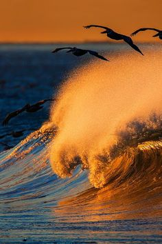 Flying birds in the sea waves <3