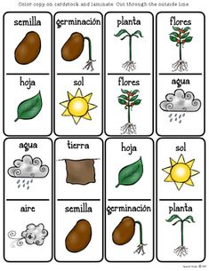 Plant Life Cycle (Spanish) by Spanish Studio Sistema Solar, Spanish Flashcards, Core Learning, Spanish Teaching Resources, Chicken Life, Butterfly Life Cycle, Preschool At Home, Math Concepts, Vocabulary Words