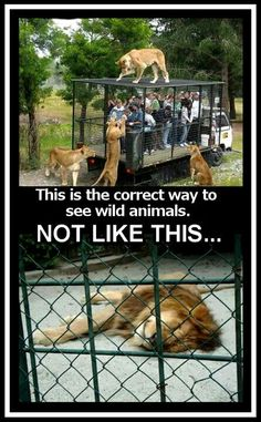The correct way to see wild animals...I agree!!!!!
