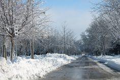 snow in winter