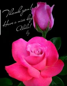 Thank You Images, Your Image, Rose, Flowers, Plants, Pink, Plant, Roses, Royal Icing Flowers