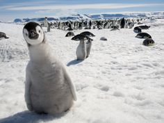 Curious penguin.
