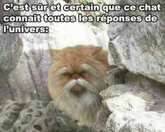 Ce chat
