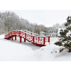 Rotary Gardens Red Bridge in Snow ❤ liked on Polyvore featuring backgrounds, winter, christmas, fillers and frames & background