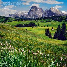 Italy, Dolomites, Alpe di Siusi, Sassolungo
