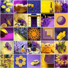 Contrasting Colors - Yellow & Purple   Flickr - Photo Sharing!