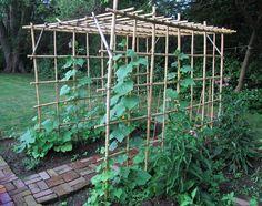 Diy Vegetable Garden Trellis: My Bamboo Vegetable Trellis Arbor Vertical Vegetable Gardens, Vegetable Garden For Beginners, Vegetable Garden Design, Vegetable Gardening, Gemüseanbau In Kübeln, Garden Trellis, Bamboo Trellis, Diy Trellis, Container Gardening Vegetables